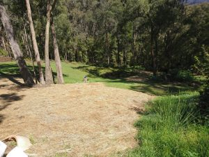 Discarded paddock hay with grass seed potential spread over bare earth patches. Human potential, likewise, needs space to develop.