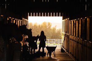 Picture of a horse carer in a stable in the early morning. Image illustrates a concept from a discussion with a business owner using the ROQUE coaching methodology to explore ideas.